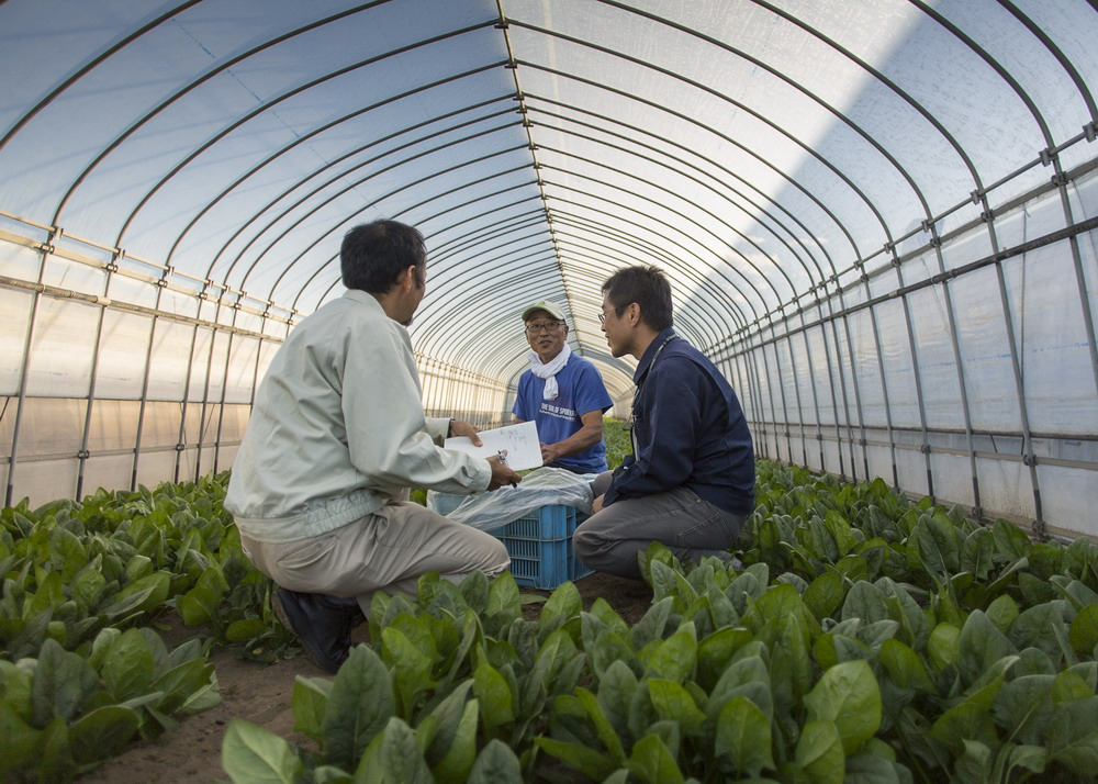 Japanese grower and representative in greenhouse